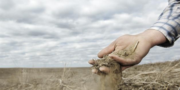 Bauernregeln sollen das Wetter vorhersagen - stimmt das?