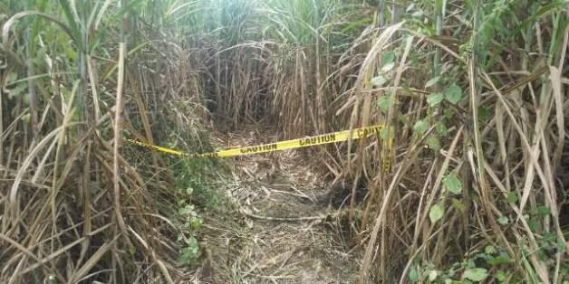 한국인 남녀 세 명이 시신으로 발견된 필리핀 마닐라 북쪽 산페르난도시 외곽 사탕수수밭.