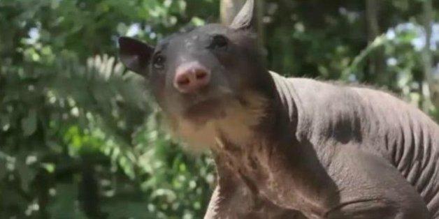 Nach 20 Jahren Misshandlung: Bär erlebt zum ersten Mal Freiheit