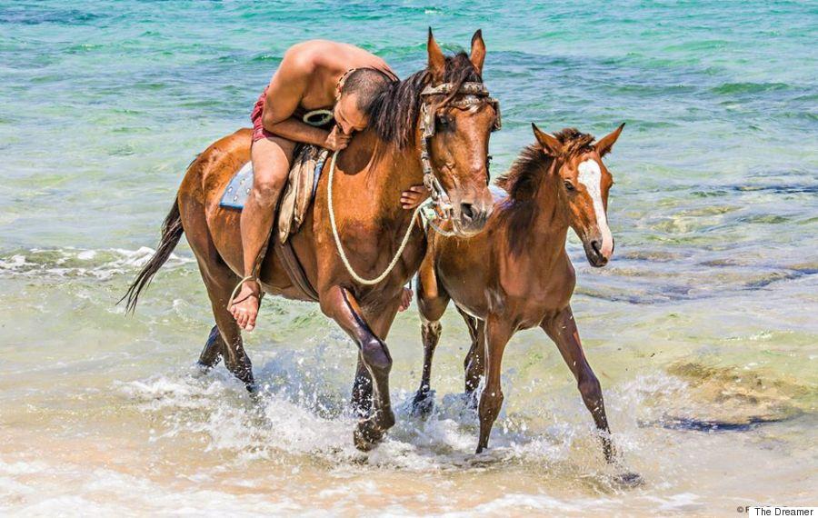 horse the dreamer