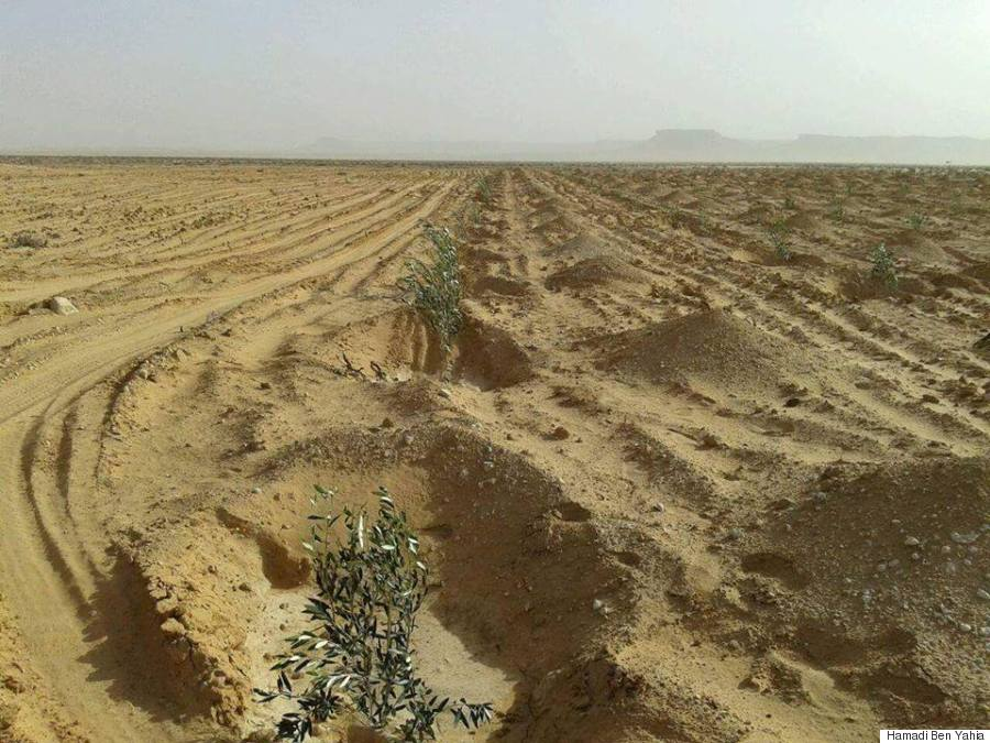desert plantation agriculture hamadi ben yahia