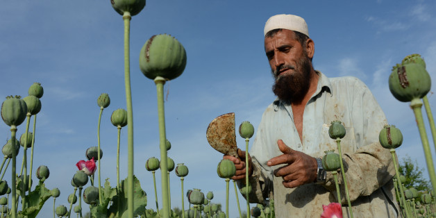 (FILES) In this photograph taken on April 19, 2016, an Afghan farmer harvests opium sap from a poppy field in the Chaparhar district of Nangarhar province.Afghanistan saw a 10 percent jump in opium cultivation this year, a sharp rise owing to favourable weather, growing insecurity and a drop in international support for counter-narcotics operations, the UN said October 23, 2016. / AFP / NOORULLAH SHIRZADA        (Photo credit should read NOORULLAH SHIRZADA/AFP/Getty Images)