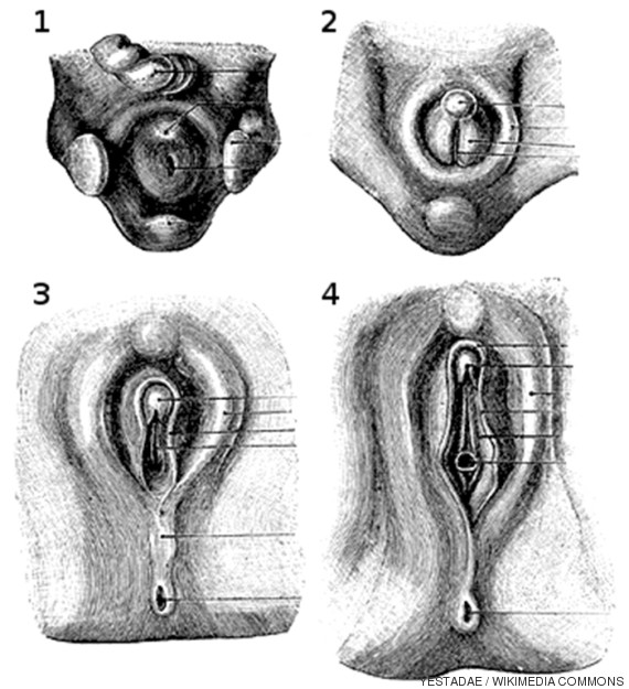 anatomiaclitoris