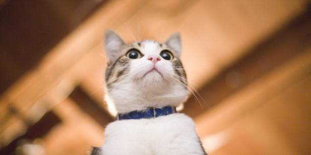 Cat From Below