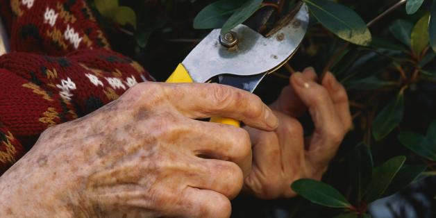 Eine Frau aus NRW stirbt - was ein halbes Jahr später in ihrem Garten wächst, wirkt wie ein Wunder