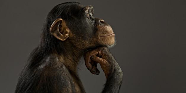 Forschern in Lausanne ist es gelungen, zwei gelähmte Affen wieder gehen zu lassen