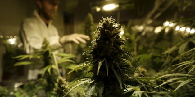 Rot-Rot-Grün will nochmal die Cannabis-Legalisierung testen