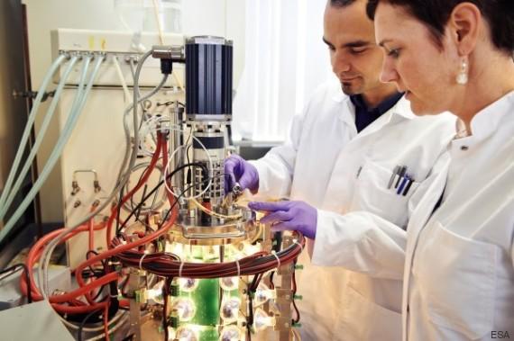spirulina laboratorio
