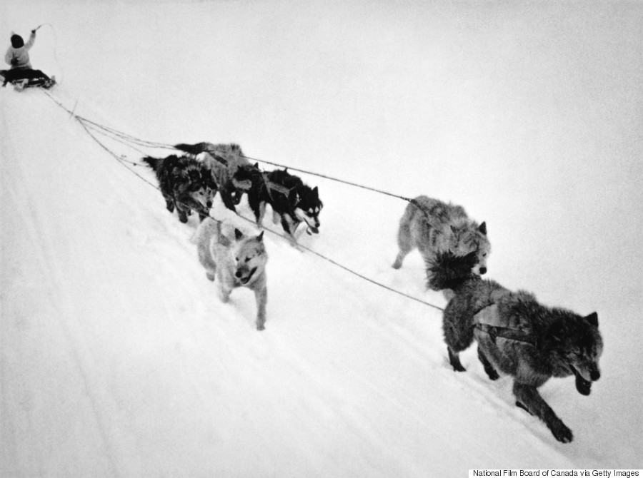 inuit sled dogs 1960s