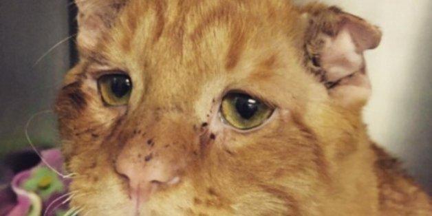 """Ce chat """"inadoptable"""" est la preuve que tout le monde mérite une chance"""