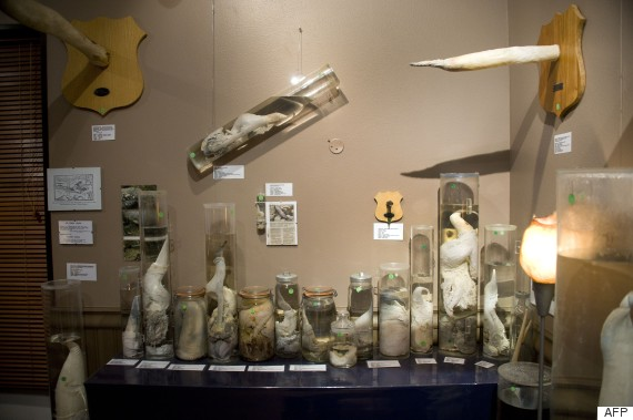 iceland penis museum