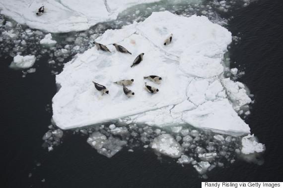 canada seal hunters