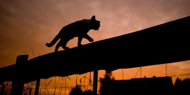 Angst vor Vogelgrippe: In diesem Bundesland könnten freilaufende Katzen eingeschläfert werden
