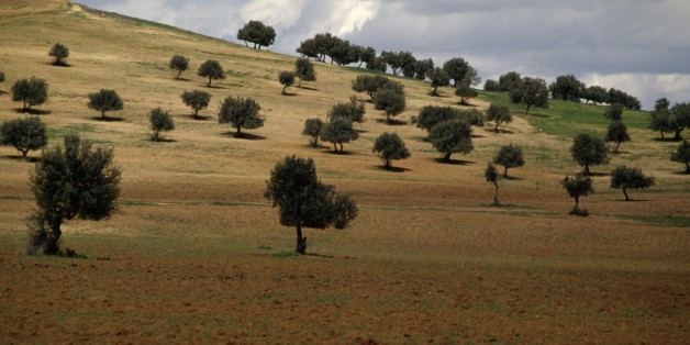 TUNISIA - MARCH 18: Agricultural landscape with olive grove and cloudy sky, Tunisia. (Photo by DeAgostini/Getty Images)