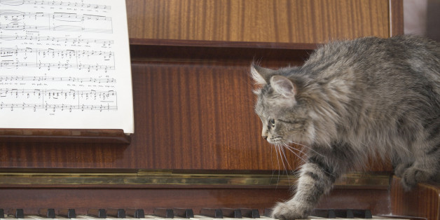 4dbd9fe939e1 A piano with a sheet of music and a cat stepping onto the piano keys