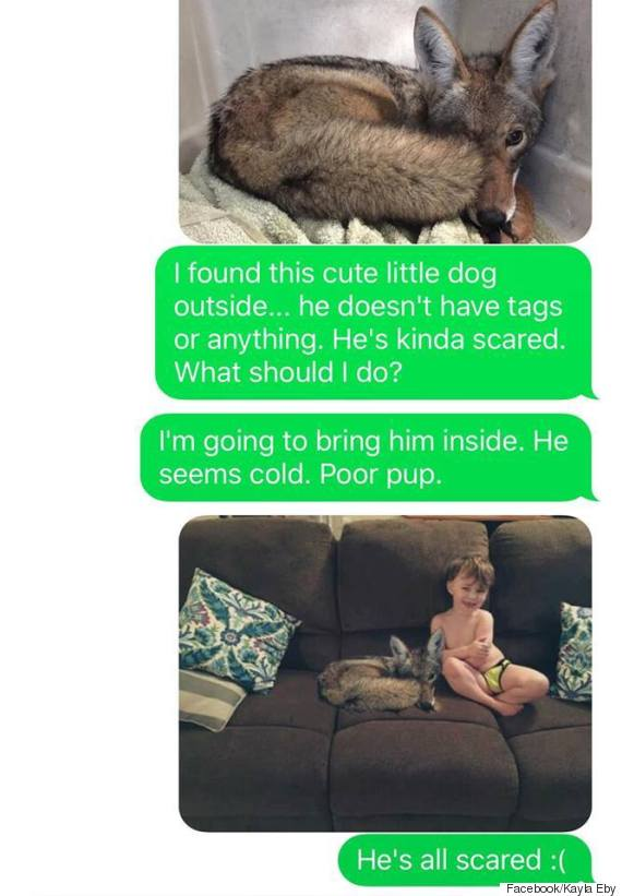coyote dog 2