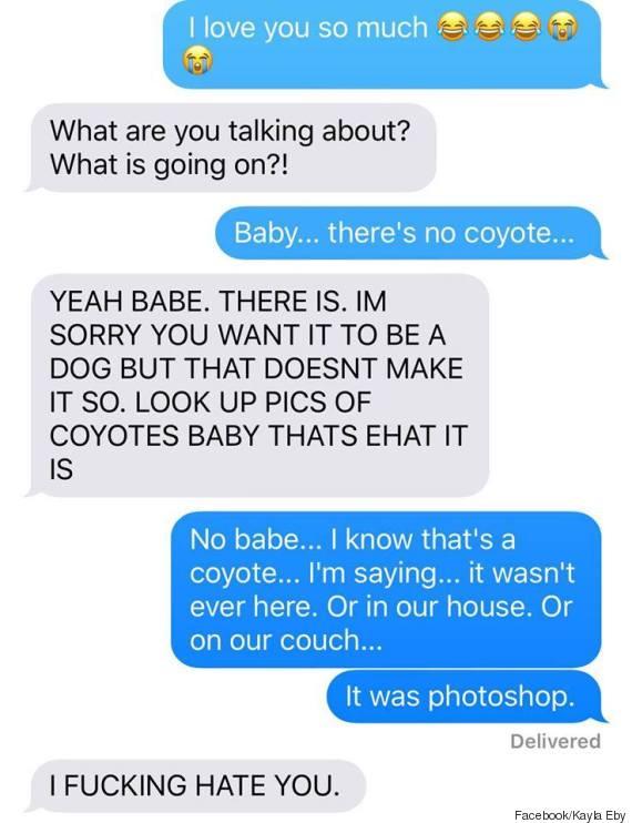 coyote dog 5