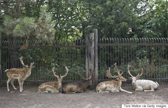 marineland deer