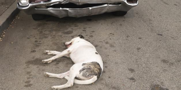 Ein Hund vor einem Auto (Symbolbild)