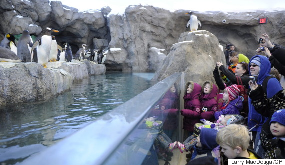 calgary zoo penguins