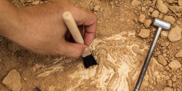 Forscher machten einen überraschenden Fund (Symbolbild)