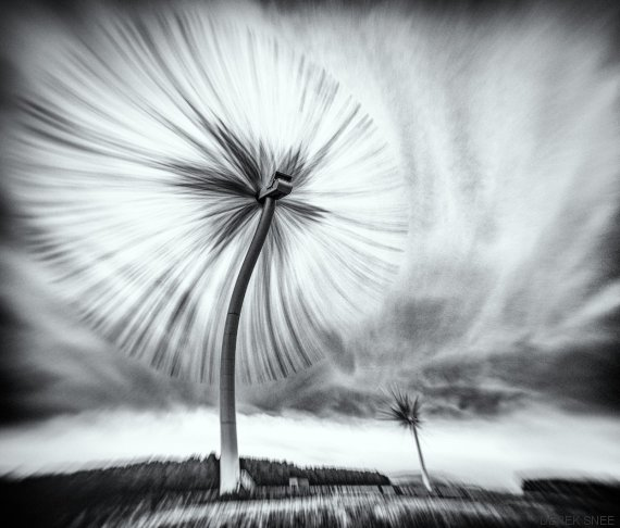 the turbo dandelion wind farm