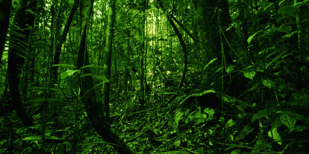 AMAZON FOREST, BRAZIL