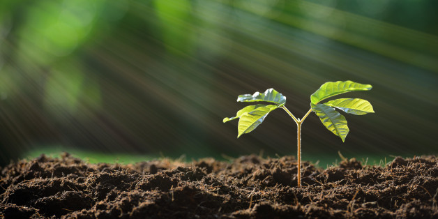 Sind Pflanzen tatsächlich intelligent? | HuffPost Deutschland