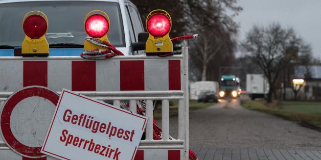 Die Geflügelpest in Niedersachsen