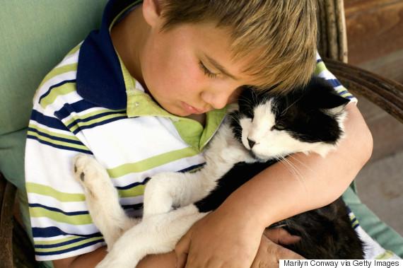 empathy cat