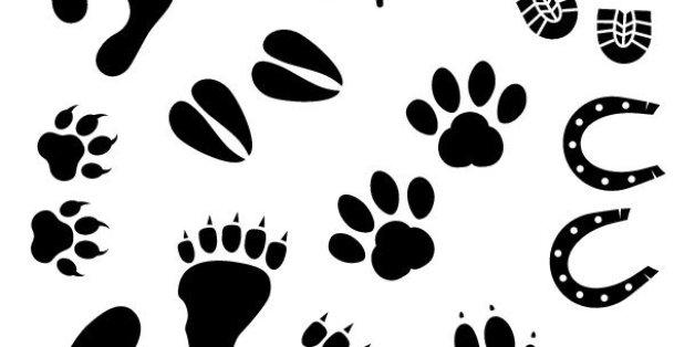Vector art: human and animal footprints.