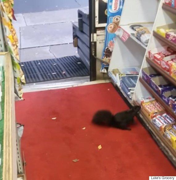 squirrel thief toronto