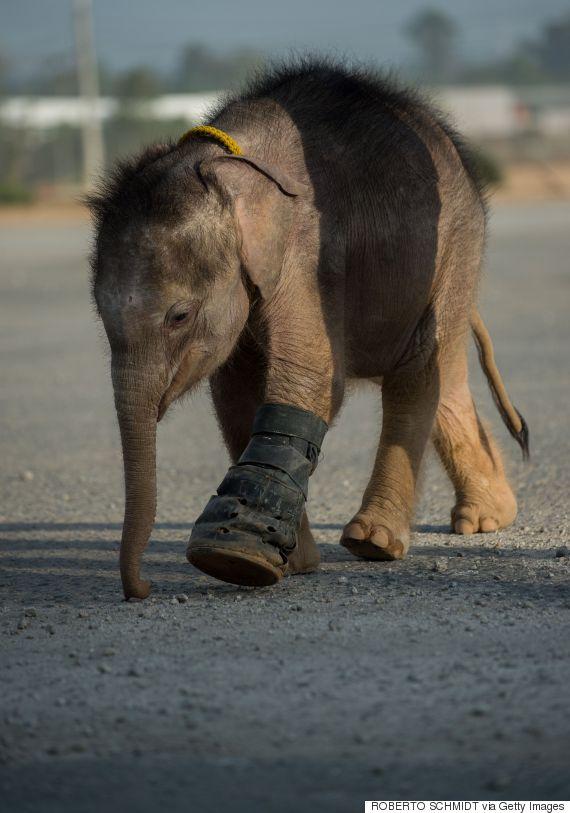 baby elephant clear sky
