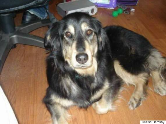 sadie missing dog