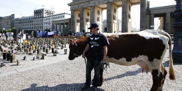 """Bundesverband Deutscher Milchbauern warnt: """"Ein Viertel aller Milchbauern kämpfen um ihre Existenz"""""""