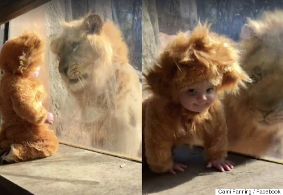 lionmeetsbaby