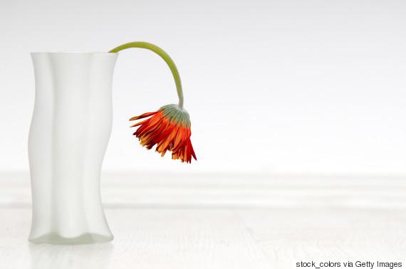 dead flower vase