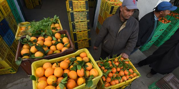 Tunisian workers collect oranges at a farm on January 3, 2017, in Menzel Bou Zelfa in the northeastern region of Nabul.Due to a record production of oranges this year thousands of the citrus fruits will be wasted due to the small local market and the lack of logistics in Tunisia to export them outside its borders.  / AFP / FETHI BELAID        (Photo credit should read FETHI BELAID/AFP/Getty Images)