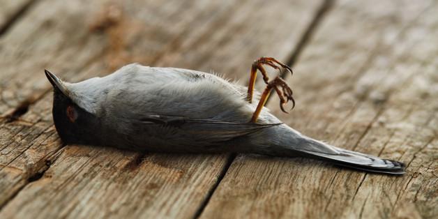 Vogelsterben in Deutschland: Die Gründe sind vielfältig.