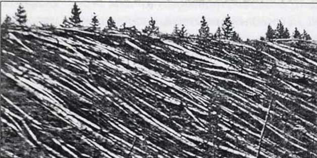 Photograph from the Tunguska event was a large explosion that occurred near the Stony Tunguska River, in what is now Krasnoyarsk Krai, Russia. Dated 1908. (Photo by: Universal History Archive/UIG via Getty Images)