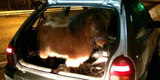 Polizei erwischt Ehepaar mit Pony im Kofferraum - und reagiert gelassen