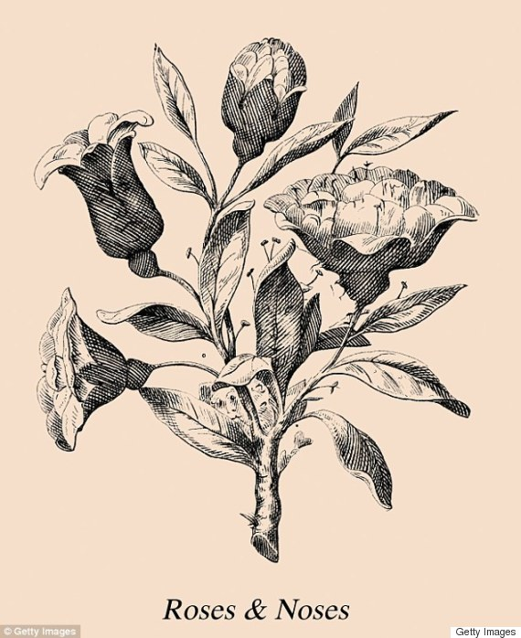 rosen raetsel