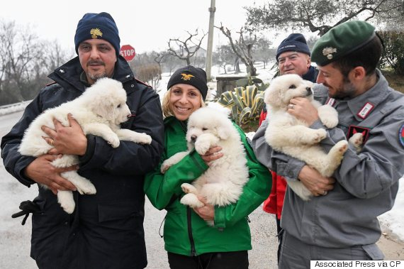 puppies hotel italy avalanche