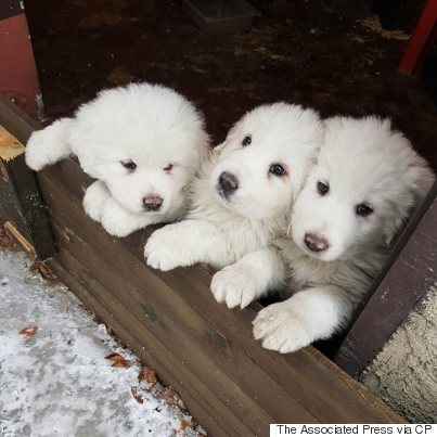 italy hotel puppies avalanche