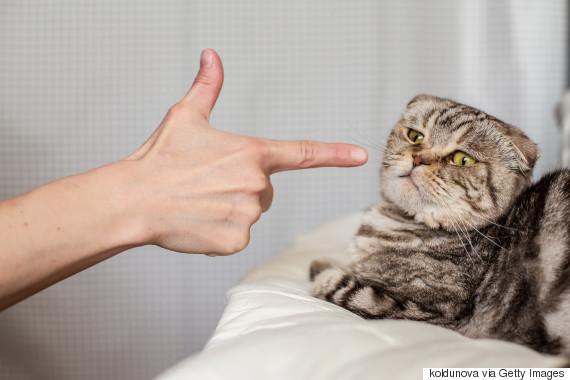 pms cats