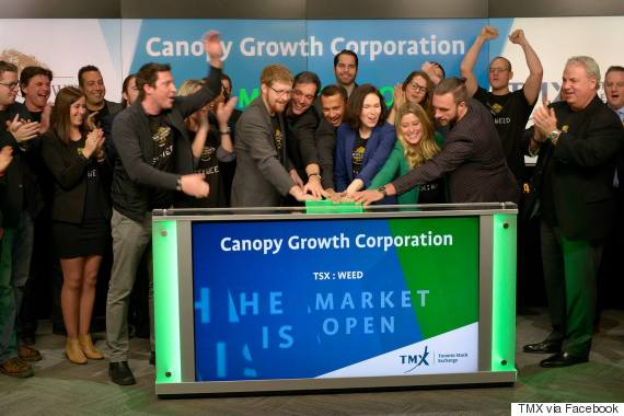 tsx weed canopy growth
