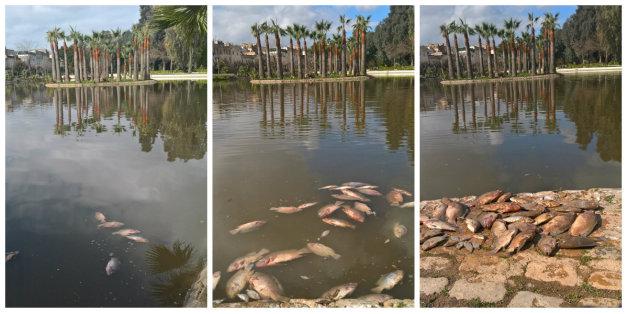 Des dizaines de poissons morts dans le bassin du jardin Jnan Sbil situé au coeur de Fès