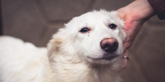 Tierschützer warnen: Tausende Hunde wegen Eurovision Song Contest in Lebensgefahr.