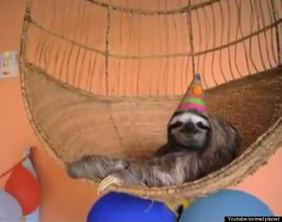 Sloth in party hat - photo#32