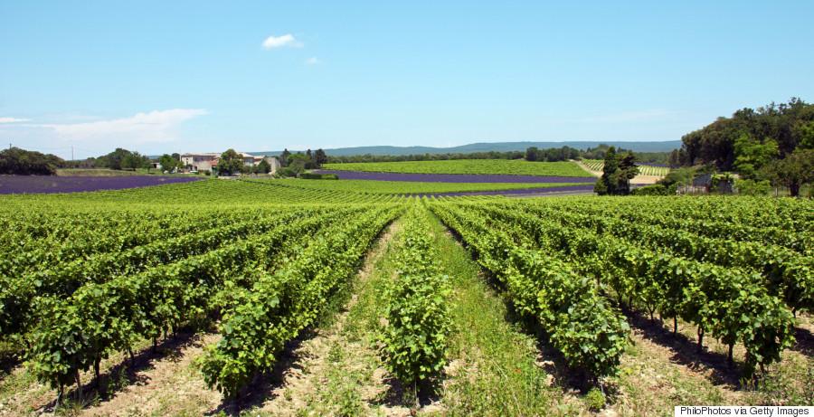 southern provence wine